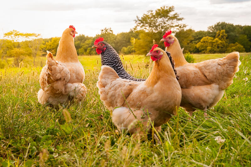 Preventing Bird Flu: the need for clean equipment