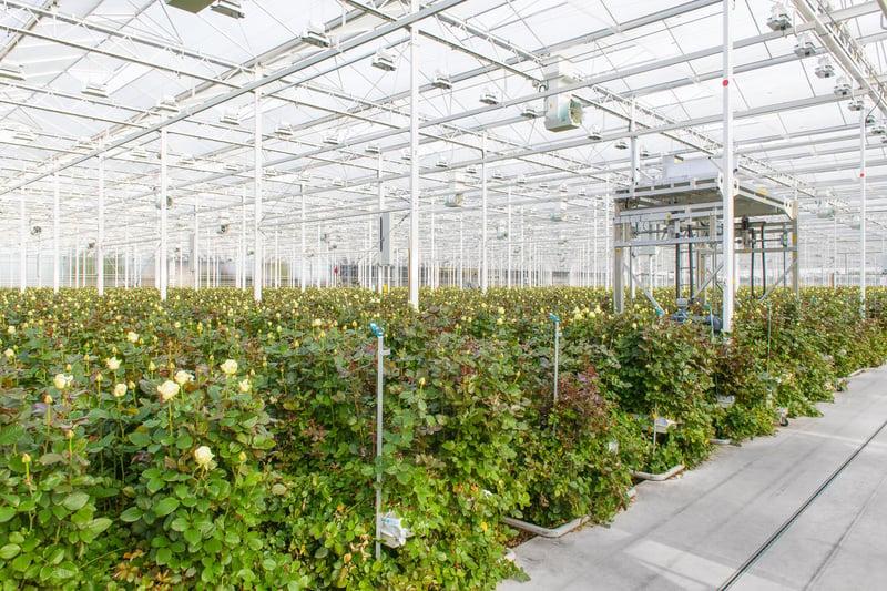 Hygiënecertificaten voor de glastuinbouw: een garantie voor goede hygiëne