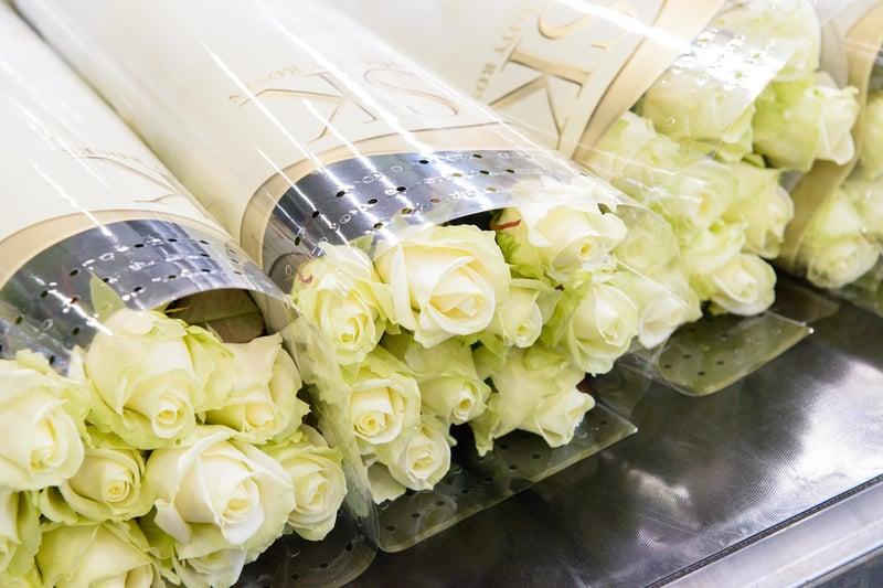 Drie tips om rozenziektes in de kas te voorkomen