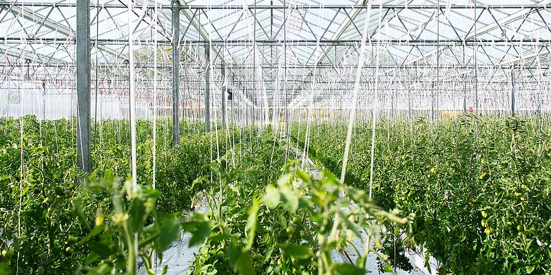 Hygiene measures in the greenhouse: food production versus horticulture
