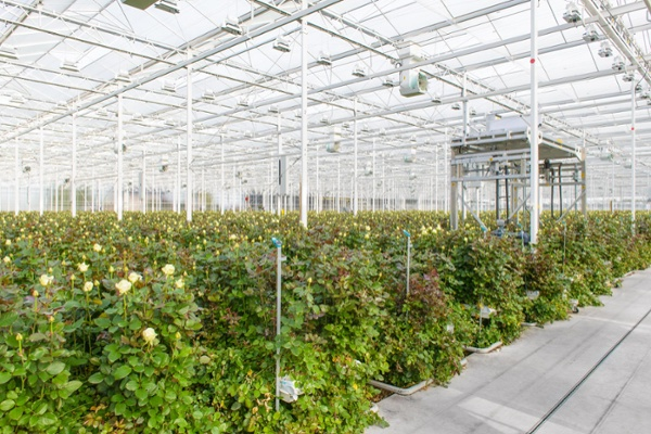 Hygiene certificates for greenhouse horticulture: a guarantee of good hygiene